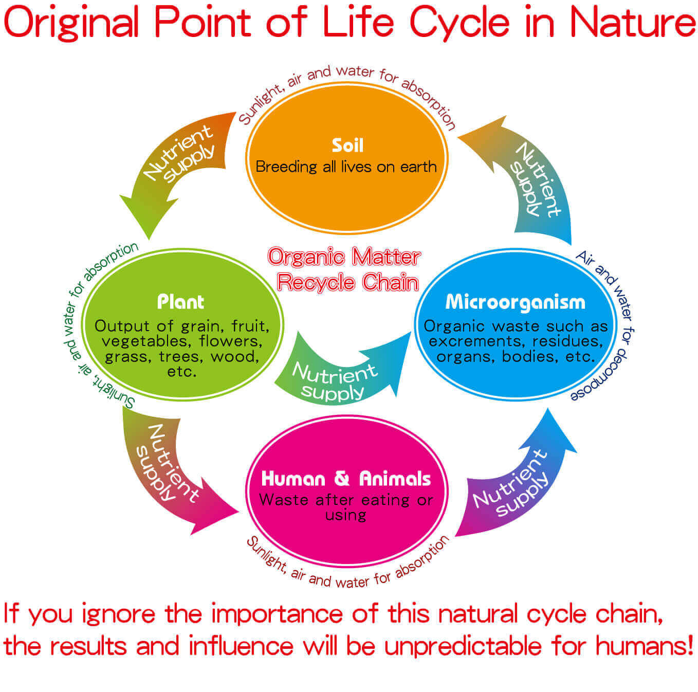 Organic Life Cycle in Nature